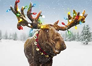 Avanti Christmas Cards, Merry Christmoose, 10-Count (700269)