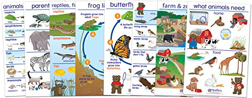 (NewPath Learning 94-0222 All About Animals Bulletin Board Chart Set, English Edition (Pack of 8))