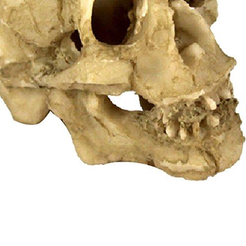 MagiDeal 2 Piezas Reptiles Terrario Paisaje Cráneo de Resina Rinoceronte Acuario Decoración Hogar Restaurante: Amazon.es: Hogar