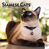 Siamese Cats 2021 12 x 12 Inch Monthly Square Wall Calendar, Animals Cat Feline