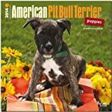 American Pit Bull Terrier Puppies 18-Month 2014 Calendar (Multilingual Edition)