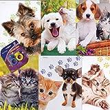 Puppy and Kitten 2 Pocket Laminated Binder Folder School Folder- 6 Pk and Bonus Eraser Ring (Assorted)