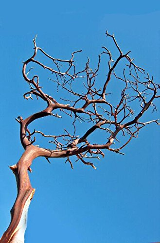 Richland Manzanita Branches Red Bark 16''-18'' Set of 6 by Richland (Image #1)