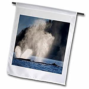 Danita Delimont - Whales - USA, Alaska, Humpback Whale in Chatham Strait - US02 PSO0756 - Paul Souders - 18 x 27 inch Garden Flag (fl_87644_2)