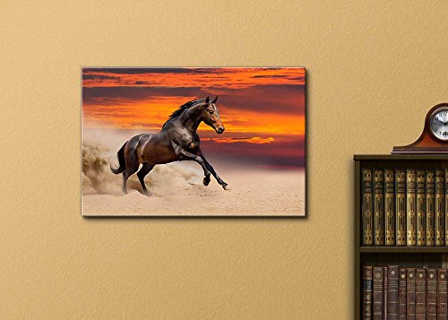 Beautiful Bay Horse Running on The Desert at Sunset Wall Decor