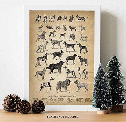 Vintage Farm Animal Print - Types of Leading Breeds of Dogs - Unique Wall Art of a Classic Image Animal Art Vintage Animal