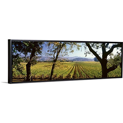 Floating Frame Premium Canvas with Black Frame Wall Art Print Entitled Vines in a Vineyard, Far Niente Winery, Napa Valley, California, 60