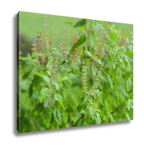 Ashley Canvas, Wild Ocimum Sanctum Flowers Aka Tulasi Thai Holy Basil, Home Decoration Office, Ready to Hang, 20x25, AG6553951 by Ashley Canvas
