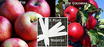 Fuji Apple Tree - Red Columnar Apple Tree Seeds 20 Apple Seeds Upc 646263362372 + 2 Plant Markers
