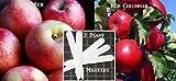 Fuji Apple Tree - Red Columnar Apple Tree Seeds 20 Apple Seeds Upc 646263362372 + 2 Plant Markers