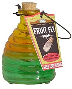 Springstar Glass Fruit Fly Trap
