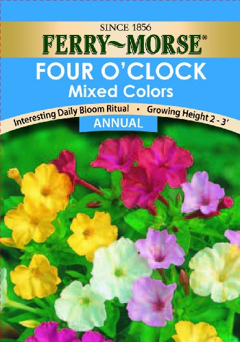 4 Oclock Flowers - Ferry-Morse Four O'Clock Mixed Colors Seeds (Annual)