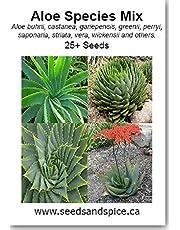 Aloe Species Mix 25+ Seeds