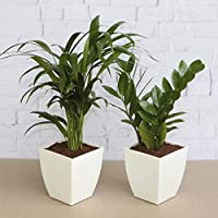 Up to 50% off on top air purifier live plants