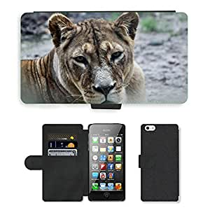 Super Stella Cell Phone Card Slot PU Leather Wallet Case // M00106208 Zoo Animal Cat Animal World Lion // Apple iPhone 5 5S 5G
