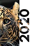 2020: Gift for someone traveling to Africa Useful Planner Calendar Organizer Daily Weekly Monthly Student Diary for notes on secret santa beginning with L Leopard