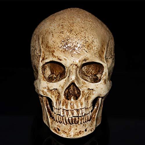 Skull Resin Sculpture Model Medical Painting Film Special Halloween Decoration Crafts Figurine Sculpture ()