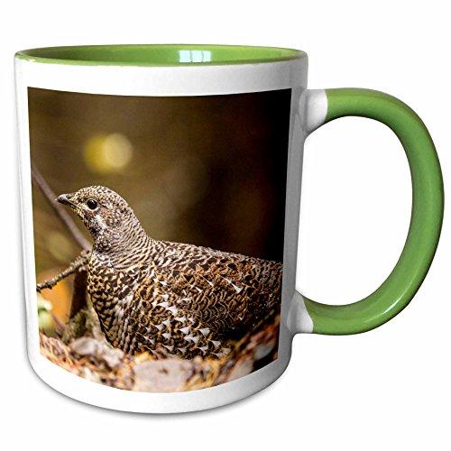 3dRose Danita Delimont - Chuck Haney - Birds - Spruce grouse in Glacier National Park, Montana, USA - 15oz Two-Tone Green Mug (mug_189975_12)