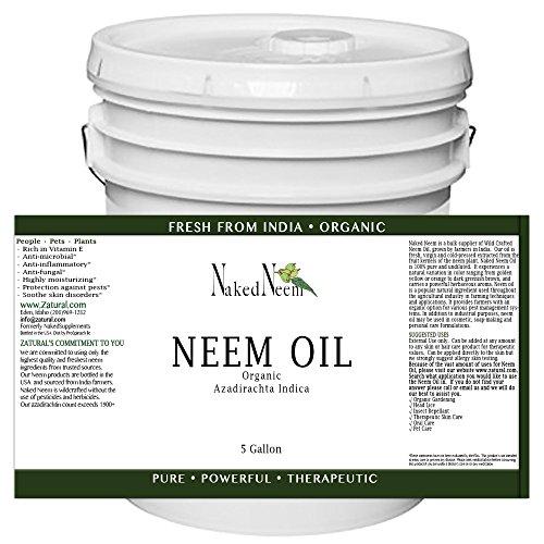 neem oil price
