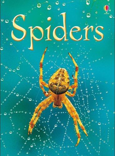 Spiders (Usborne Beginners) (Usborne Beginners) pdf
