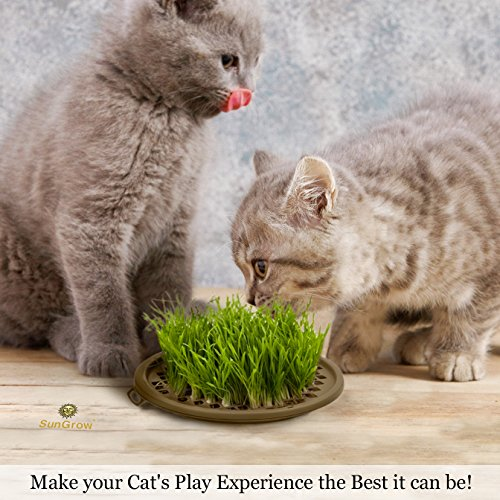 Image of Activate Cat's Senses with Grass Toy -- Grow your Own Patch of Natural Grass - Includes Organic Seeds, Soil & Vermiculite - Stimulates Cat's Touch, Taste & Smell Ability - Bring Outdoor Nature Indoors