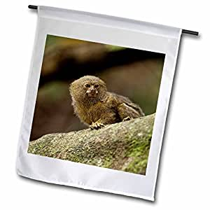 Danita Delimont - Wildlife - Pygmy Marmoset wildlife, Cocaya River, Amazon Ecuador - SA07 POX2033 - Pete Oxford - 18 x 27 inch Garden Flag (fl_86402_2)