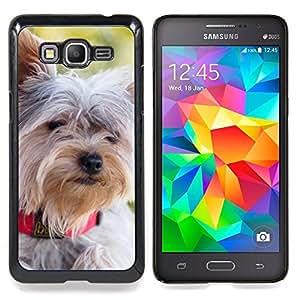 """Schnauzer Norfolk Terrier Havanese"""" - Metal de aluminio y de plástico duro Caja del teléfono - Negro - Samsung Galaxy Grand Prime G530F G530FZ G530Y G530H G530FZ/DS"""