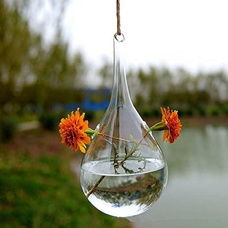NewDreamWorldu0027s Teardrop Glass Hanging Vase/Indoor Water Plant  Planter/Olivary Glass Terrarium/Garden