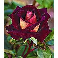 100 piezas / bolsa de 16 tipos de semillas de rosa raras Semillas Semillas de flores de color Bonsai Inicio planta en…