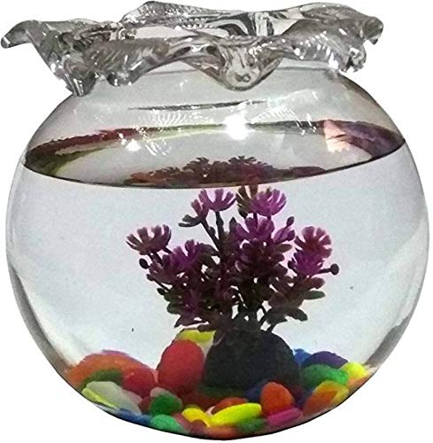 Afast Clear & Transparent Round Glass Fish Pot for Joom View with Designer Neck & DecorativeAccessories of 8 Inch Table…