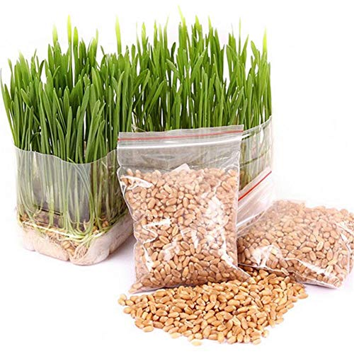 Laxative Foods - YaYa Organic Cat Grass Plant,Pet Grass Seeds, Natural Hairball Control and Hairball Remedy for Cats