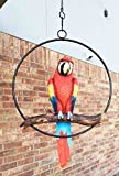 Patio Home & Garden Hanging Scarlet Macaw Parrot Perching on Branch In Metal Round Ring Sculpture For Nature Lovers Tropical Bird Collectors by Gifts & Decor