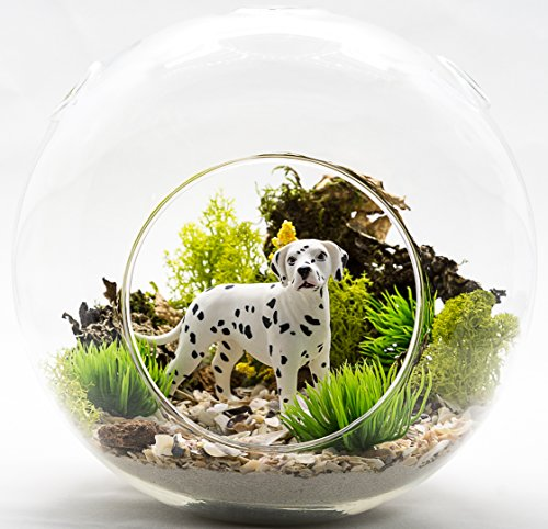 [Terrarium Kit | Dalmatian Lovers Terrarium Design Kit | Dog Breed Series | Complete DIY Gift Set | 6