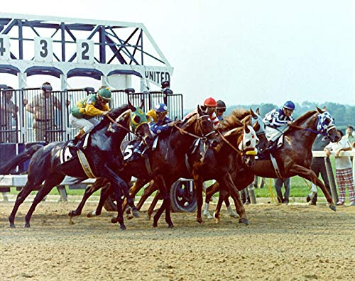 Secretariat Belmont Stakes Winner No. 2 8 x 10 Metal Aluminum Tin Gloss Sign