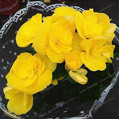 20 Pcs/Bag Begonia Bonsai Mixed Color Bonsai Flower Bonsai Begonia Bonsai Begonia Plant Potted Family Garden Balcony - (Color: 1): Garden & Outdoor