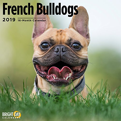 (French Bulldogs 2019 16 Month Wall Calendar 12 x 12 Inches)
