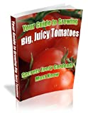 growing tomatoes - Growing Tomatoes: How To Grow Tomatoes That Are Big, Colorful, Juicy, And Tasty!