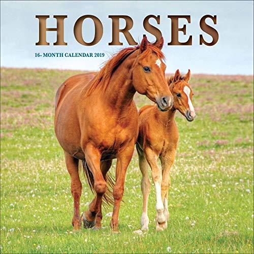 2019 Horses 2019 Mini Wall Calendar, Horses by Vista Stationery & Print Ltd