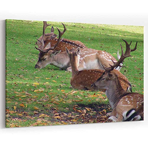 Male and Wild Deer Laying Down On The Field Scene in Autumn Seas Prints Wall Art for Decor