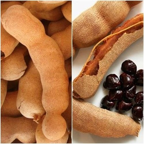 Sweet Tamarind 10 Fresh Seeds, Tropical Seasonal Sweet Fruits Seed From Thailand (As Tamarind Fruit compare prices)