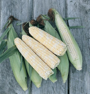 David's Garden Seeds Corn Sweet Double Standard D289 (Bi-Color) 100 Organic Seeds