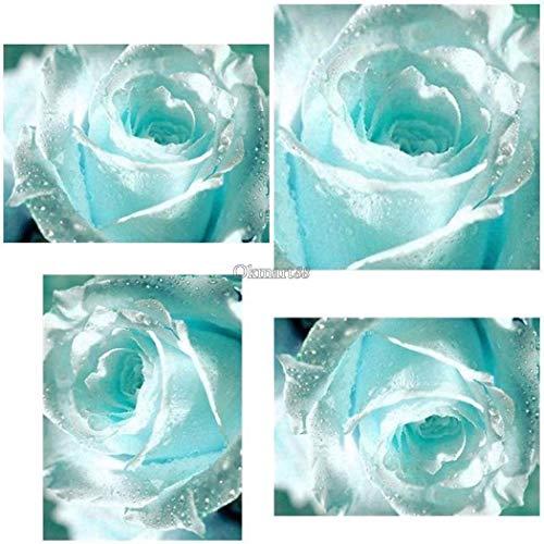 Go Garden 100Pcs: New Nice Adorable Flower Fragrant Blooms Light Blue Rose Seeds Ok