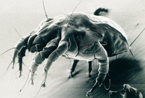 Peticare Chien Bio Lotion Anti-Acariens & Demangeaison - Soin Traitement Spécial, Arrête Prurit, Infection Fongique, Apaise Peau Atopique & Irritée, Soins 100% naturels - petDog Protect 2101 (100 ML)