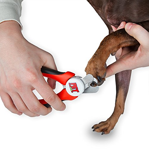 how to cut dogs nails with clippers