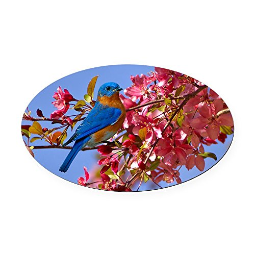 CafePress - Bluebird in Blossoms Oval Car Magnet - Oval Car Magnet, Euro Oval Magnetic Bumper (Oval Blossom)