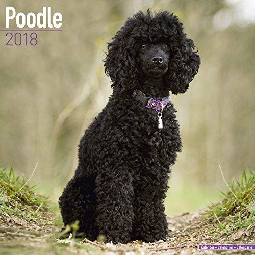 Poodle Calendar 2018 - Dog Breed Calendar - Premium Wall Calendar 2017-2018