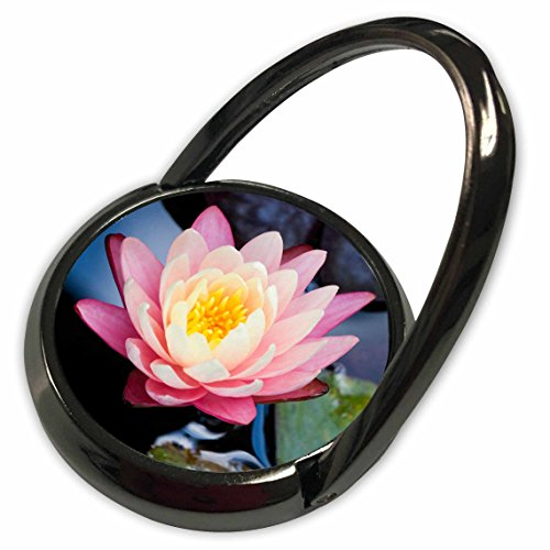 3dRose Danita Delimont - Flowers - USA, North Carolina, Water lily flower - US34 JWL0051 - Joanne Wells - Phone Ring ()