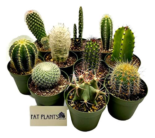 Fat Plants San Diego Cactus Plant(s) (8)]()