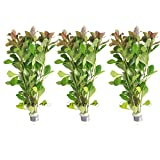 3-Bundles Ludwigia Repens Live Aquarium Decorations Water Plants by Greenpro
