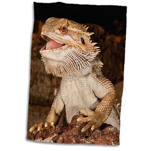 Australia Towel - 3D Rose Bearded Dragon Lizard-Native to Australia-Na02 Dno0680-David Northcott Hand/Sports Towel, 15 x 22